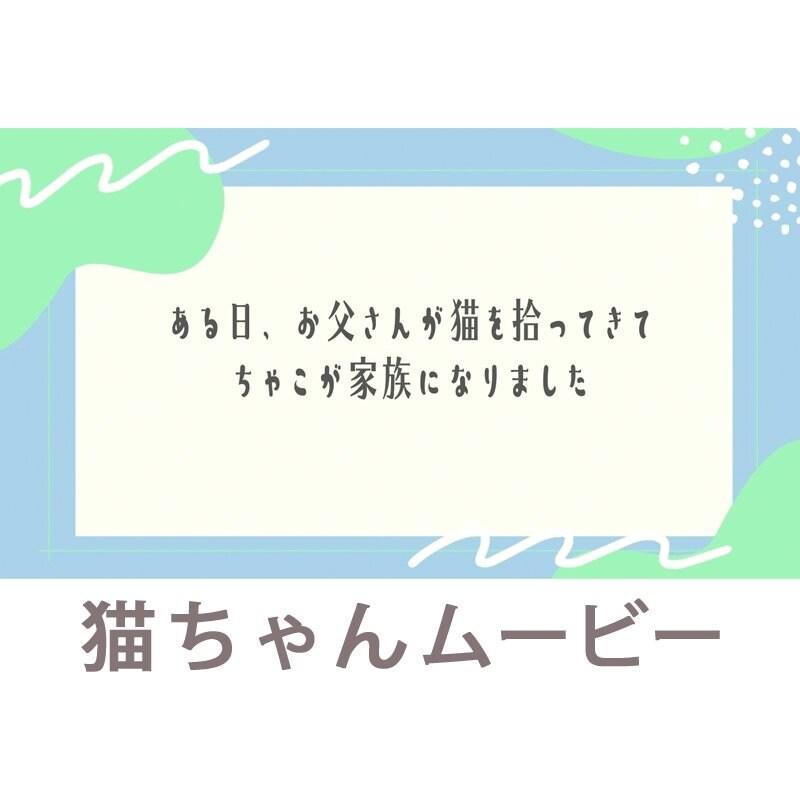 映像制作|福岡|鹿児島|ステキメーカー【映像商品】ペット「猫ちゃんムービー」わんちゃんもOKのイメージその3