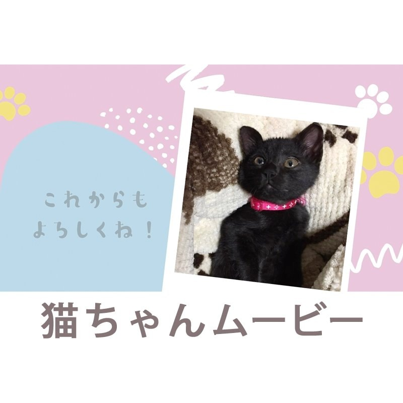 映像制作|福岡|鹿児島|ステキメーカー【映像商品】ペット「猫ちゃんムービー」わんちゃんもOKのイメージその2