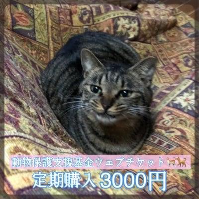 [月イチ定期購入]ワンちゃんネコちゃんを守る為の動物保護支援基金3000円ウェブチケット