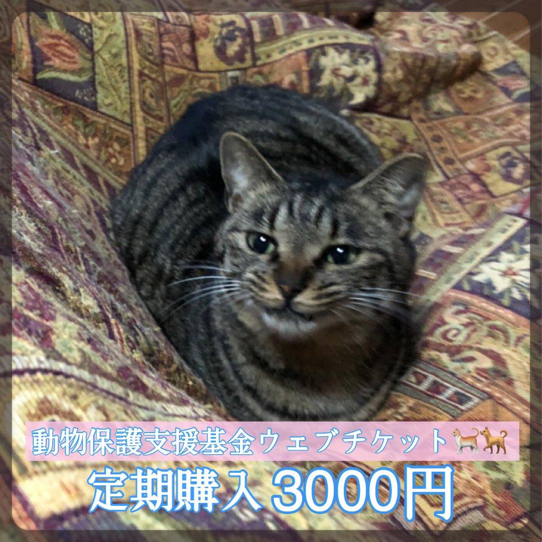 [月イチ定期購入]ワンちゃんネコちゃんを守る為の動物保護支援基金3000円ウェブチケットのイメージその1