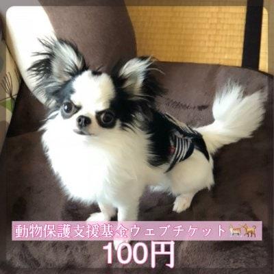 ワンちゃんネコちゃんを守る為の動物保護支援基金100円ウェブチケット