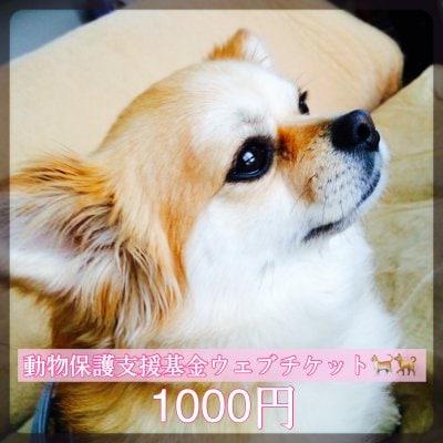 ワンちゃんネコちゃんを守る為の動物保護支援基金1000円ウェブチケット