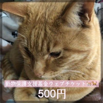 ワンちゃんネコちゃんを守る為の動物保護支援基金500円ウェブチケット