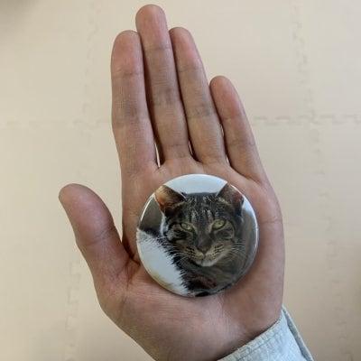とっても可愛い猫バッジ3個セット(直径5.5㎝/厚さ5㎜)どんな猫ちゃんが...