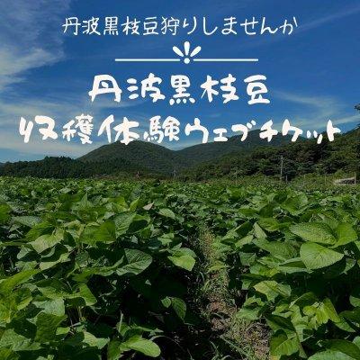 丹波黒枝豆収穫体験ウエブチケット