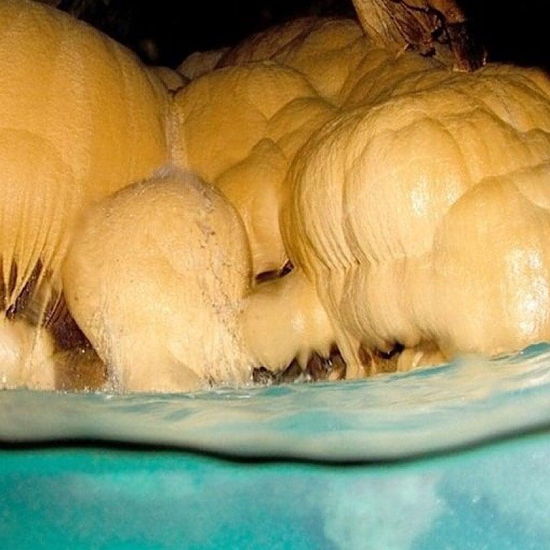 コロナ緊急事態宣言明け自分へのご褒美に!エメラルドグリーンの海が半端ネー/宮古島格安パンプキン鍾乳洞探検ツアー/1日1回1組限定/オフシーズン12月から2月も実施可能のイメージその5