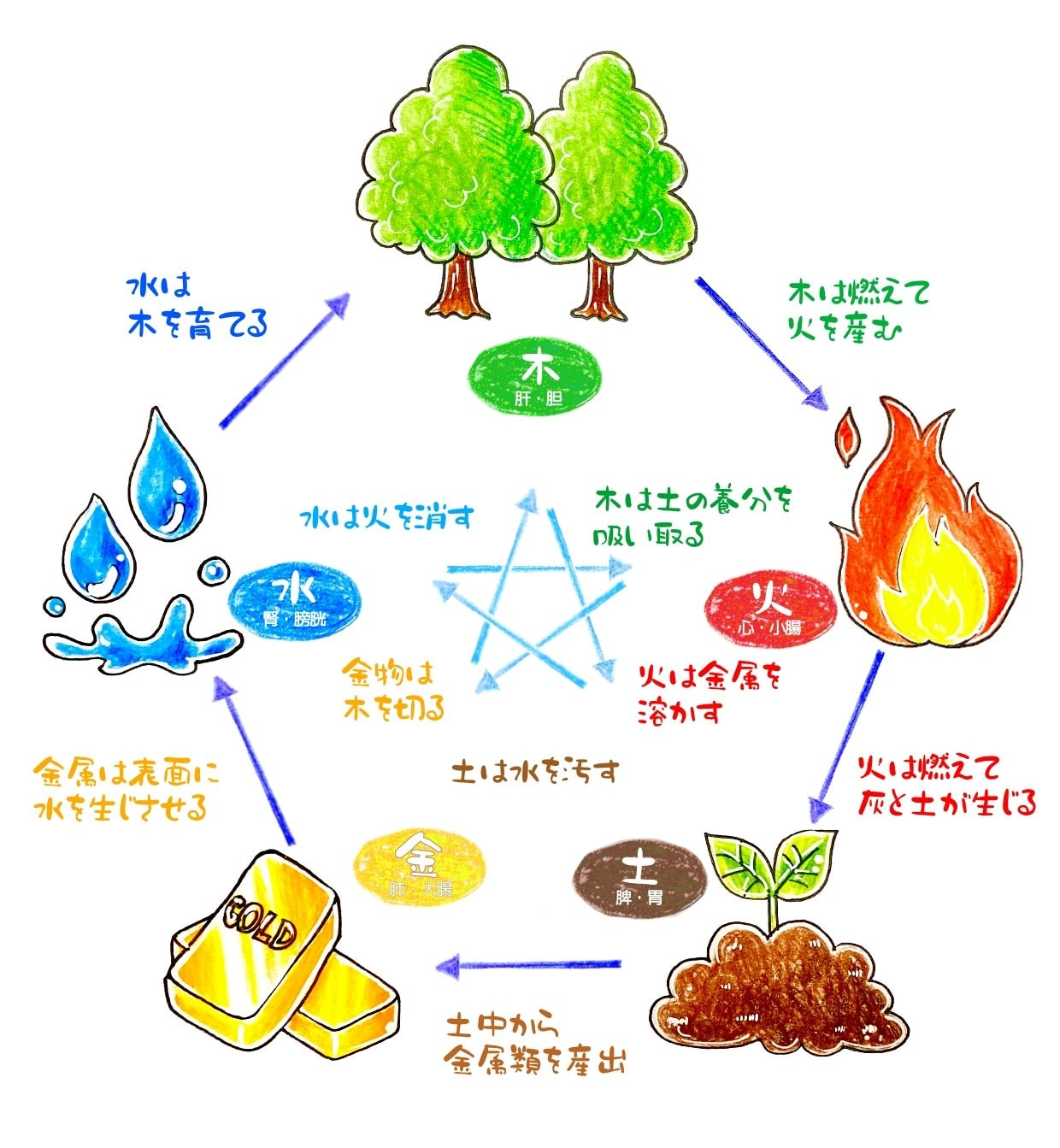 【オンライン講座】マクロビオティックの陰陽五行(全6回)のイメージその1