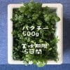 農薬不使用❕パクチーサラダ野菜500g箱入り