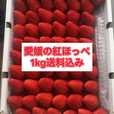 【送料無料】愛媛の完熟紅ほっぺ 1kg(4パック分)
