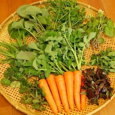 レシピ付き!山菜入り!旬のおまかせ野菜セットSサイズ
