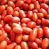 美肌トマト「ロッソナポリタン」1kg イタリアンミニトマト