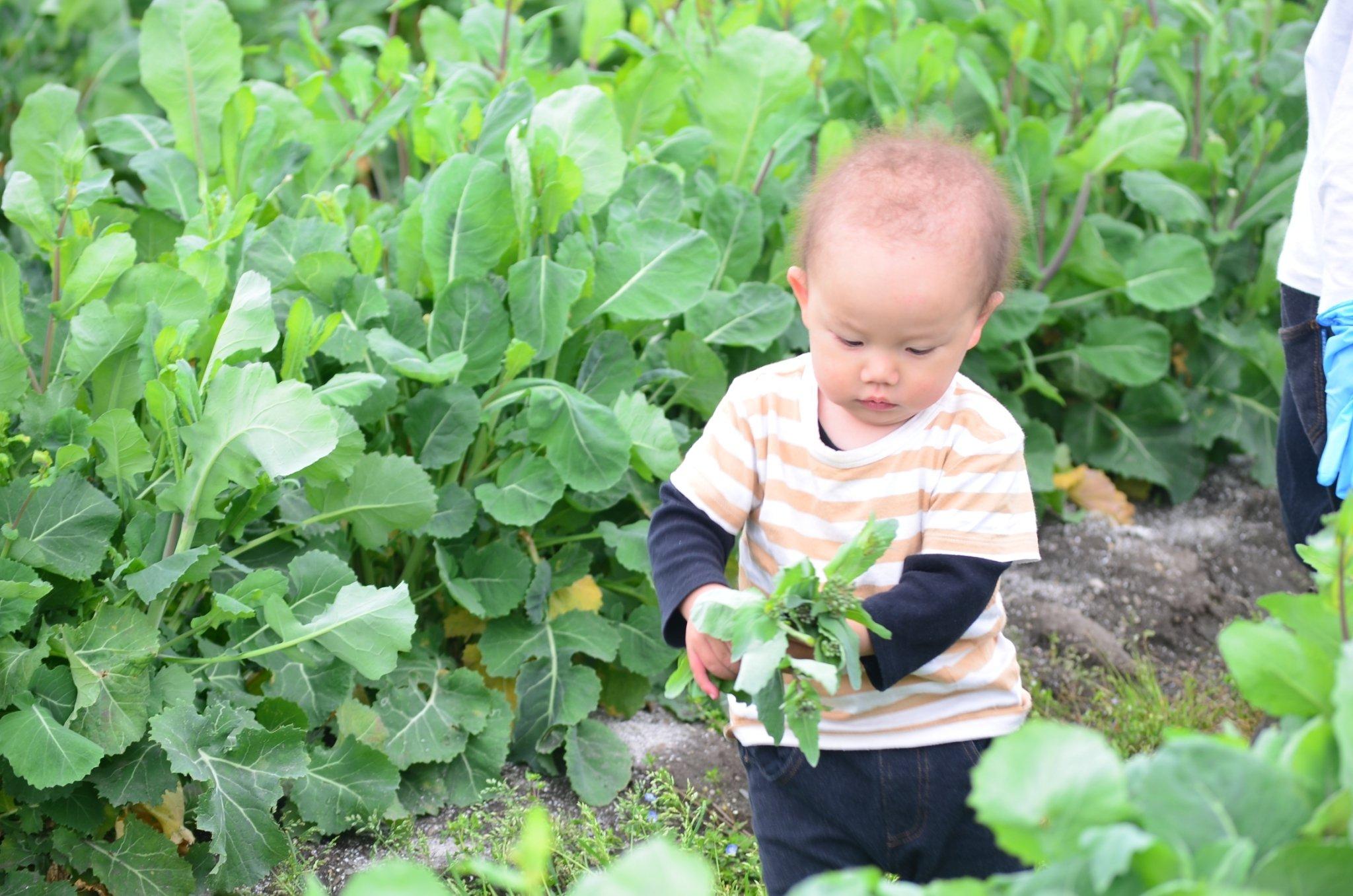 収穫体験!岡山ひるぜん高原の野菜★蒜山インターから車で5分のイメージその4