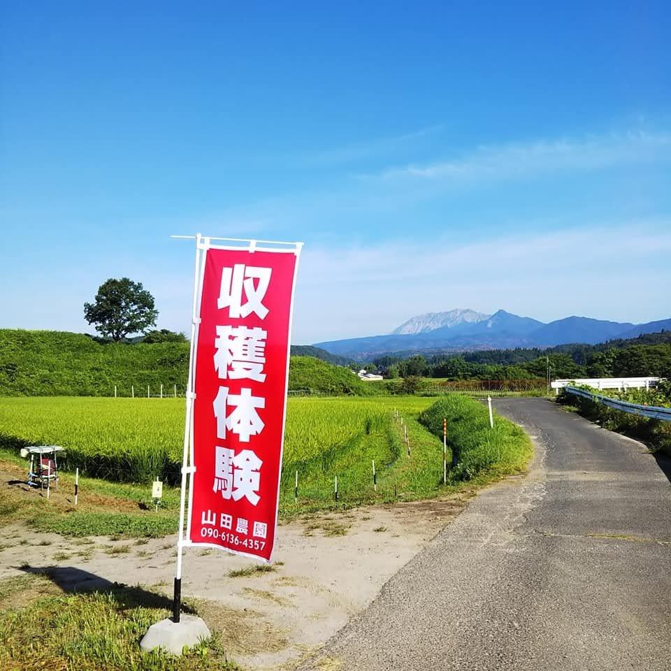 収穫体験!岡山ひるぜん高原の野菜★蒜山インターから車で5分のイメージその3