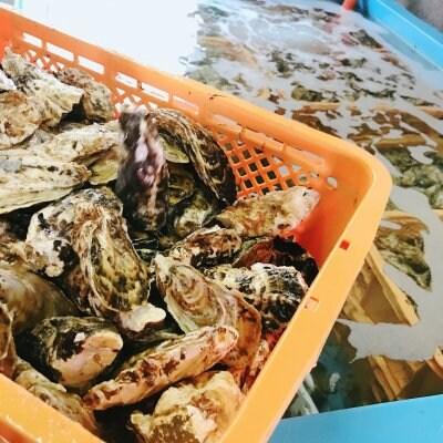 【播磨灘 御津産ぷりっぷりの牡蠣】柴田水産 殻付牡蠣 2kg
