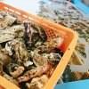 【播磨灘 御津産ぷりっぷりの牡蠣】柴田水産 殻付牡蠣 3kg