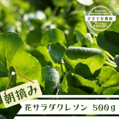【現地受け渡し/デリバリー専用】朝摘み/サラダクレソン/500g[さすてな農園]