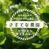 【現地受け渡し/デリバリー専用】朝摘み/清流クレソン/100g[さすてな農園]