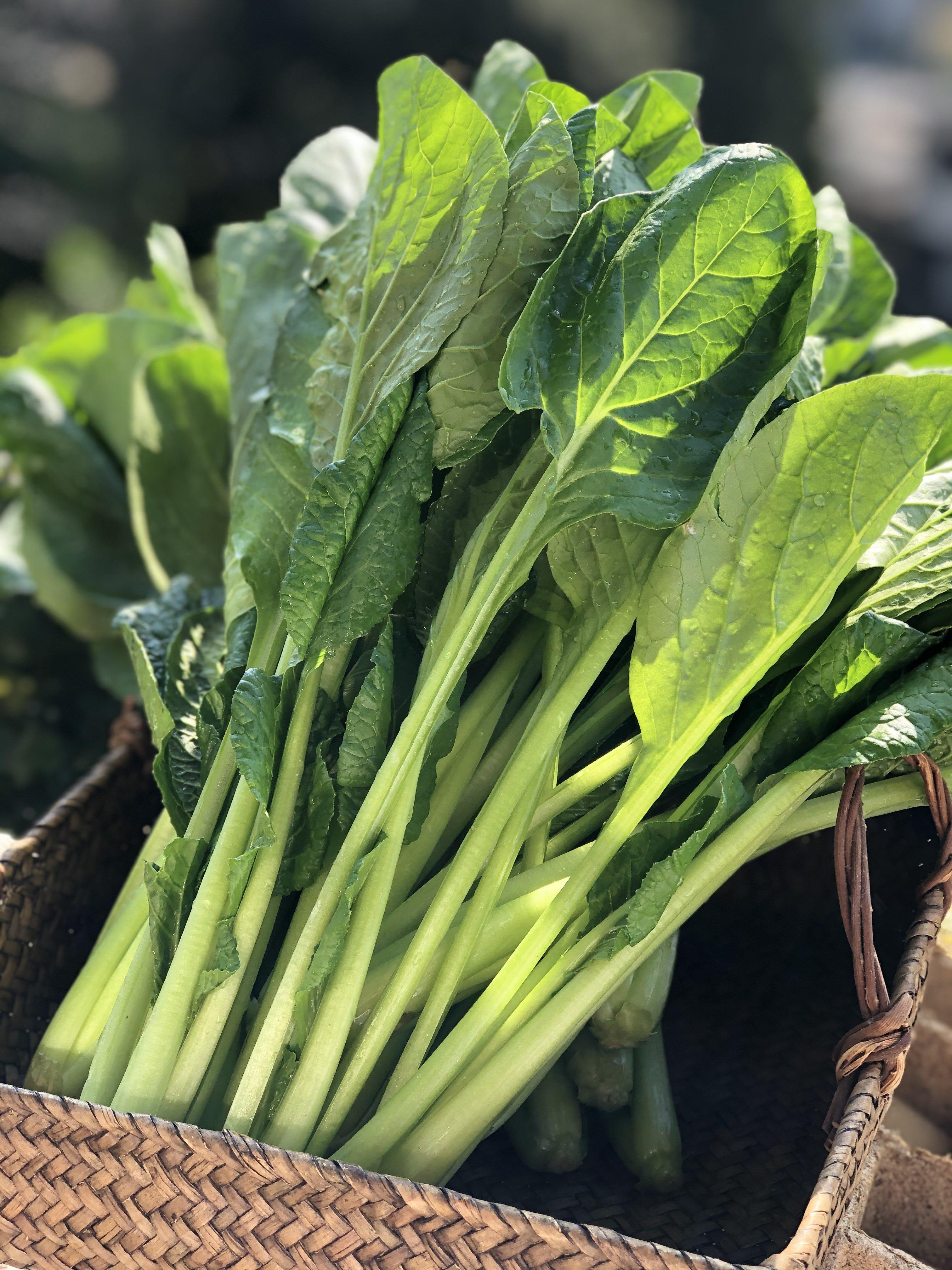 【現地受け渡し/デリバリー専用】朝摘み/小松菜/約1k g[さすてな農園]のイメージその1
