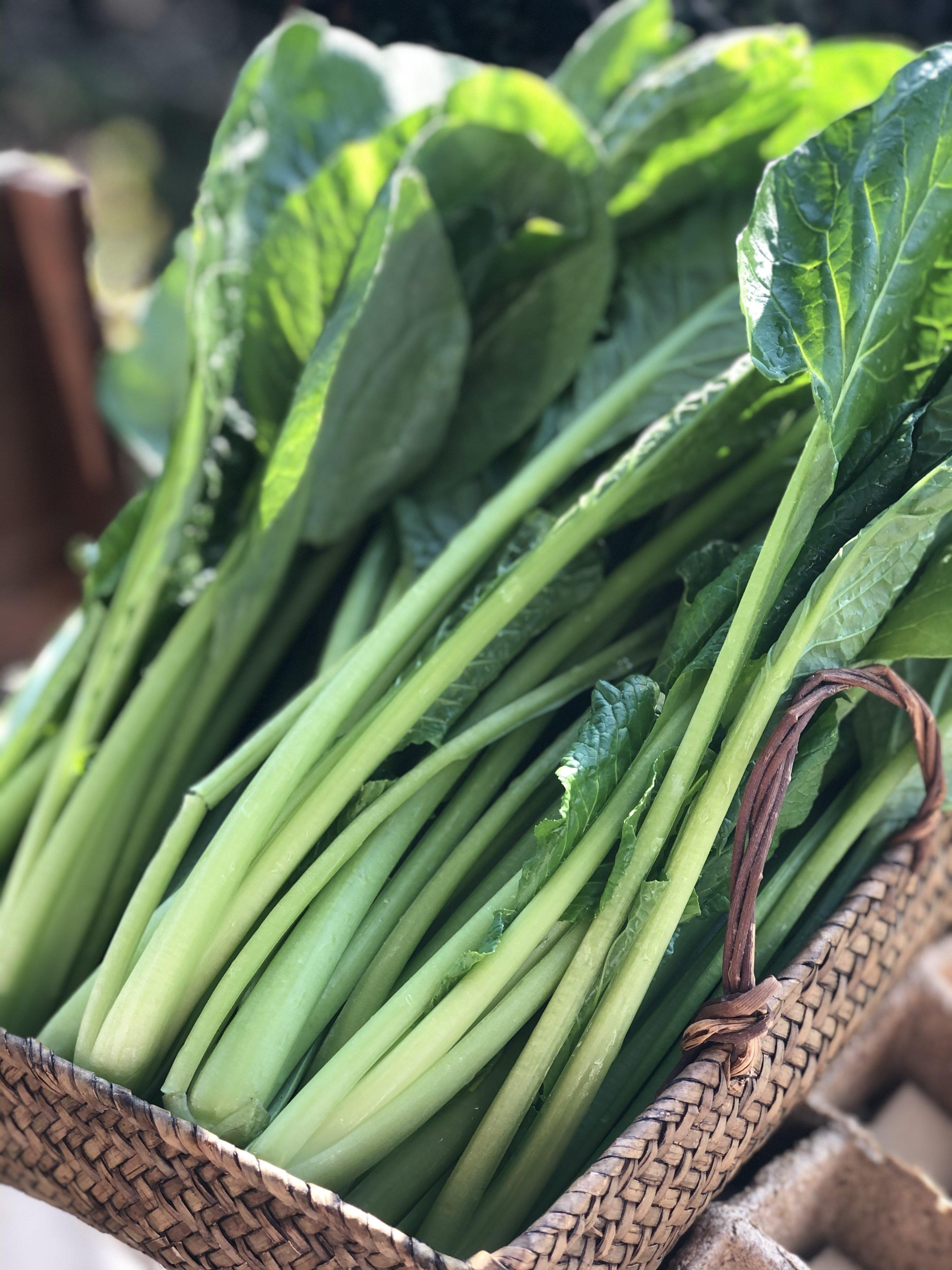 【現地受け渡し/デリバリー専用】朝摘み/小松菜/約1k g[さすてな農園]のイメージその2
