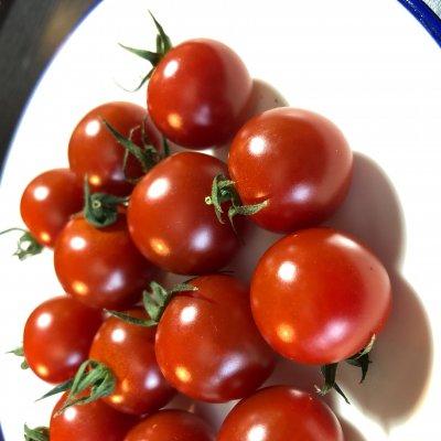 [現地受け渡し/デリバリー専用】有機肥料栽培/ミニトマト(小鈴)/150g/1P