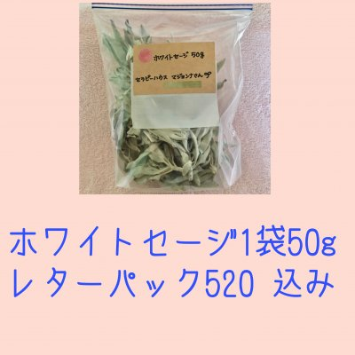 ホワイトセージ50g 1袋(レターパック520込み)