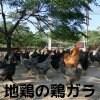 江田島地鶏三種の鶏ガラ4kg(6〜8羽分)(産地直送・冷凍便)