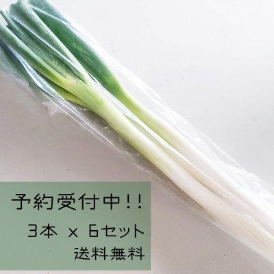 【送料無料】お得なおすそ分け用 白ネギセット(3本 x 6袋)