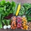 オーガニック野菜BOX( 9月1日〜9月10日到着分)