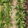 LaLaLaFarmオンライン発酵講座 vol.1「農と発酵 ①」2月23日