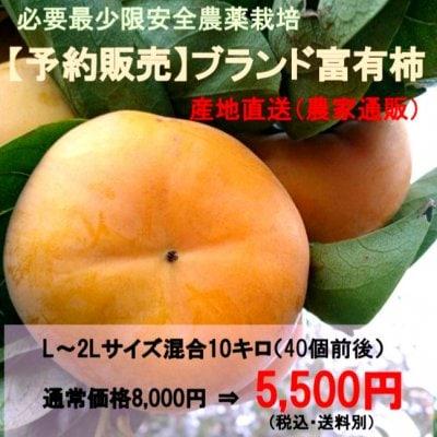 ブランド富有柿L~2Lサイズ混合10kg|必要最少限安全農薬栽培 産地直送(農...
