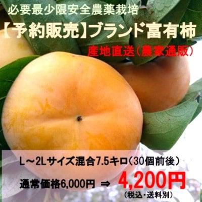 ブランド富有柿L~2Lサイズ混合7,5kg|必要最少限安全農薬栽培 産地直送(...