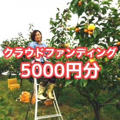 クラウドファンディング5000円分(秋の収穫でとれた富有柿2kg5~7個)