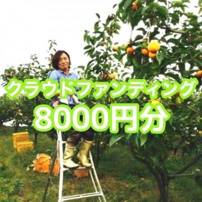 クラウドファンディング8000円分(秋の収穫でとれた富有柿7.5kg+吉野杉製割り箸など)
