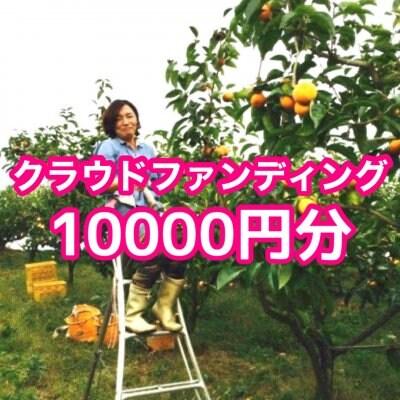 クラウドファンディング10.000円分(贈答用富有柿1ケース3Lサイズ•12個入)