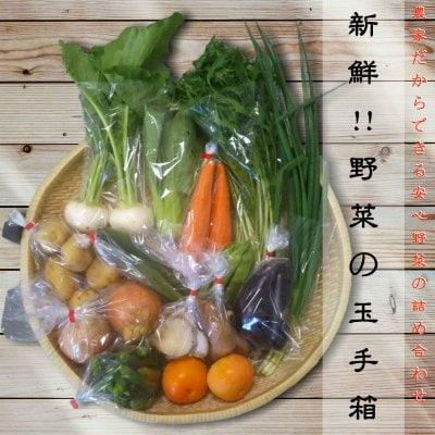 野菜通販•新鮮!!野菜の玉手箱|農家だからできる安心野菜の詰め合わせセット|予約販売専用