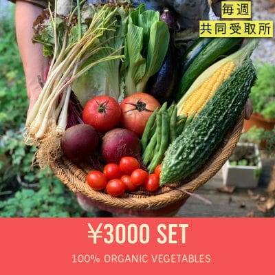 ★翌月スタート★ 野菜セット定期購入【毎週受取り:3000円セット+共同受取所300円】