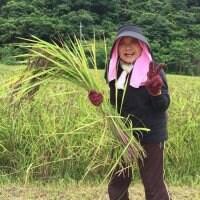 【食べて応援!】西表島産・古代米アカマヤーマイ(黒紫米)1㎏ <送料込み>
