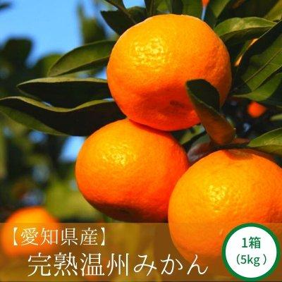 愛知県産 完熟温州みかん 1箱(5kg)