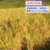 新米コシヒカリ10kg(令和2年産)