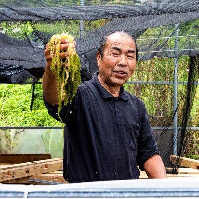 【期間限定:送料無料】【平安座島で生産した】三好和美さんの海ぶどう125g×8(80サイズ)