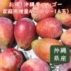 【7月上旬順次発送】お得!沖縄産マンゴー家庭用増量4㎏(10〜14玉)
