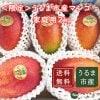 【50名様限定送料無料】【6月下旬〜発送】うるま市産家庭用マンゴー2キロ