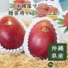 【7月上旬順次発送】沖縄産マンゴー贈答用1㎏(2〜3玉)