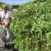 【自然栽培】モリンガファームさんご園芸の野菜・果物セット(100サイズ)