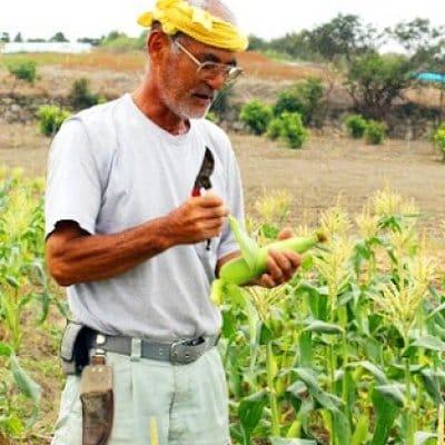 【自然栽培】モリンガファームさんご園芸の野菜・果物セット(80サイズ)