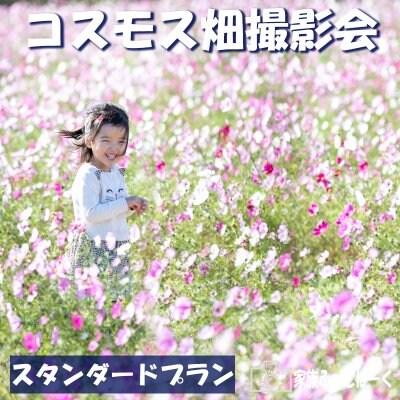 【スタンダードプラン】コスモス畑ロケーション撮影会