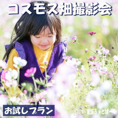 【お試しプラン】コスモス畑ロケーション撮影会