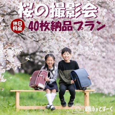 【平日:40枚納品プラン】桜の撮影会