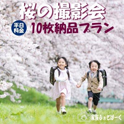 【平日:10枚納品プラン】桜の撮影会