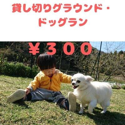 貸し切りグラウンド・ドッグラン 300円券(1家族 1時間)